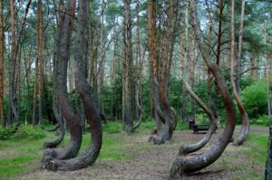 THE CROOKED FOREST NEAR SZCZECIN, POLAND
